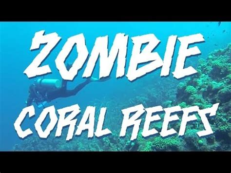 Research articles about coral reefs